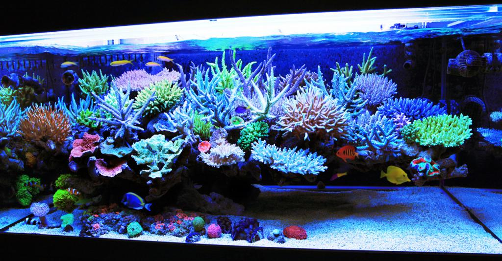 Pros And Cons - Freshwater Or Saltwater Aquarium ...